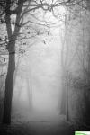 mgła10.jpg
