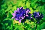 kwiatek.jpg