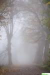 mgła07.jpg