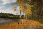 Kolory złotej jesieni (chwilowo nie padało) :))