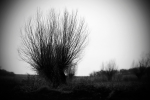drzewko1 b&w.JPG