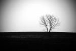 drzewko2 b&w.JPG