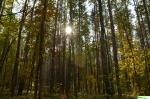 Wspomnienia z plenerku  do  lasu  - spica